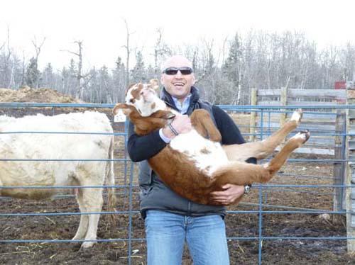 My New Pet Calf
