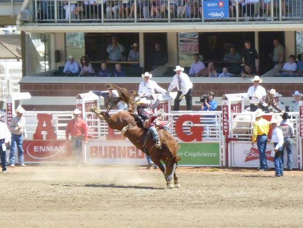 Bronc riding at the daily rodeo.