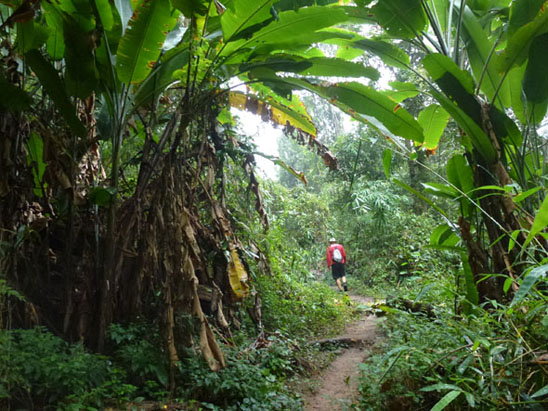 doi-suthep-trail