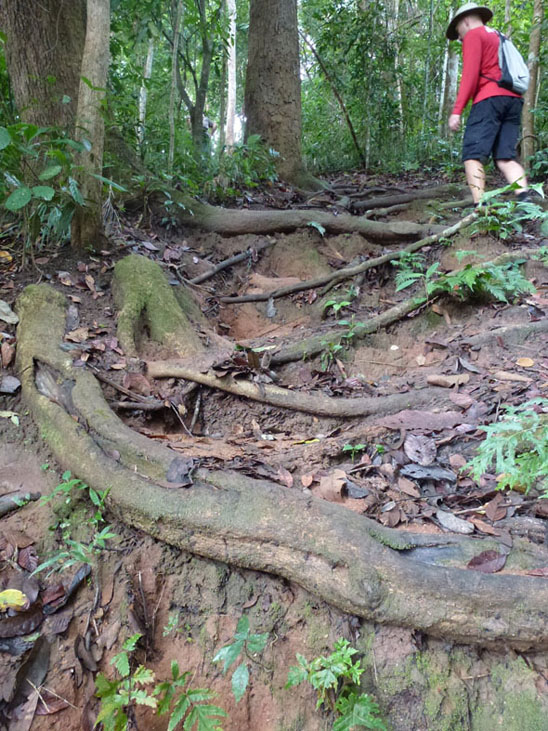 doi-suthep-muddy-hill-hike