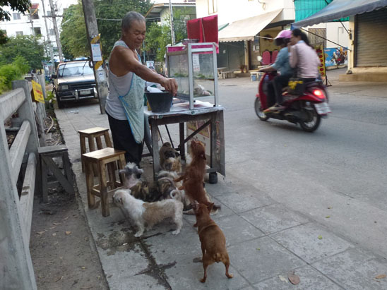 Dogs in Chiang Mai