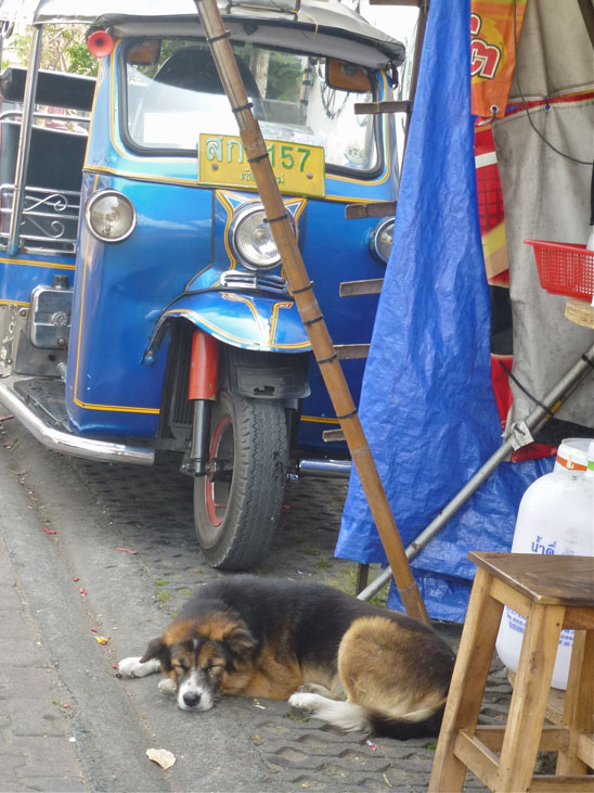 Dogs in Chiang Mai07