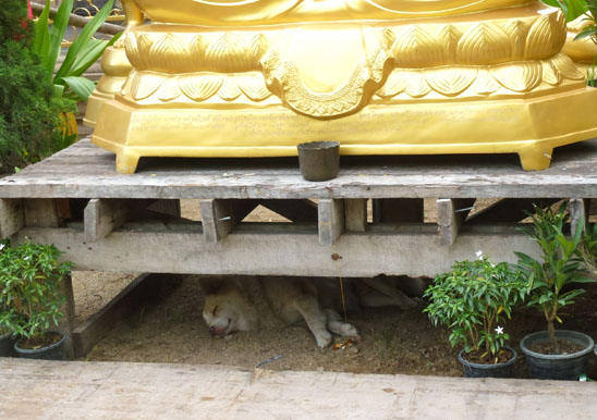 Dogs in Chiang Mai09