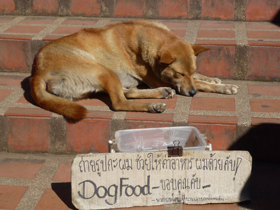 Dogs in Chiang Mai15