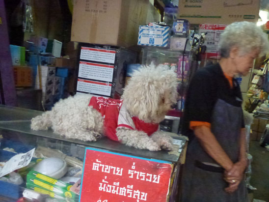 Dogs in Chiang Mai28