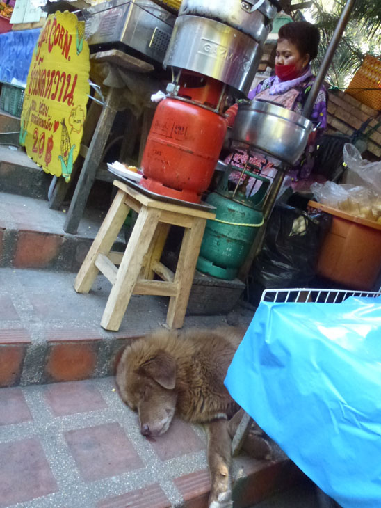Dogs in Chiang Mai31